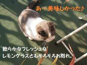 たちぐいぐい (4).jpg