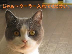 たべるよね (3).jpg
