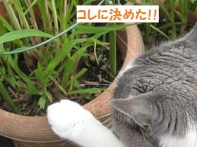 だっておいしいんだもん (4).jpg