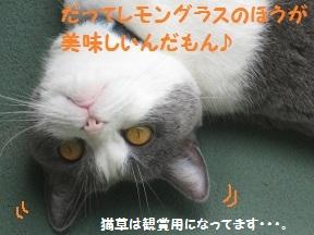 だっておいしいんだもん (5).jpg