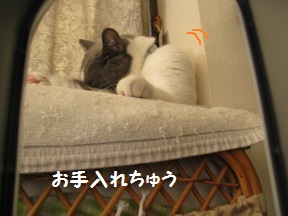 のぞ~きみ (1).jpg