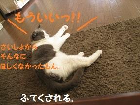 ふたがほしい2 (4).jpg