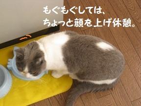 もぎゅもぎゅ (2).jpg