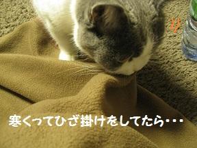 もらうずら (0).jpg