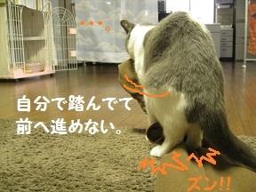 もらうずら (3).jpg