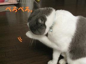 IMG_6811.jpg